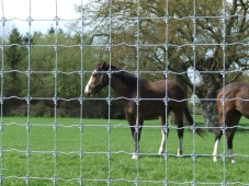 stock-fence-42in-r121108-horse-50m