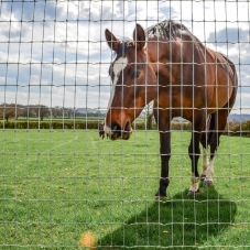 stock-fence-48in-r131208-horse-50m
