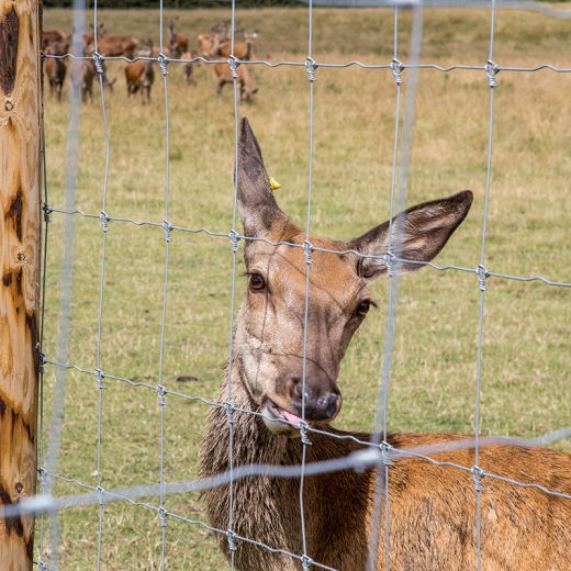 stock-fence-r1319215-deer-100m